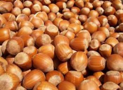 Hazelnuts Nuts wholesaler, saleit.eu